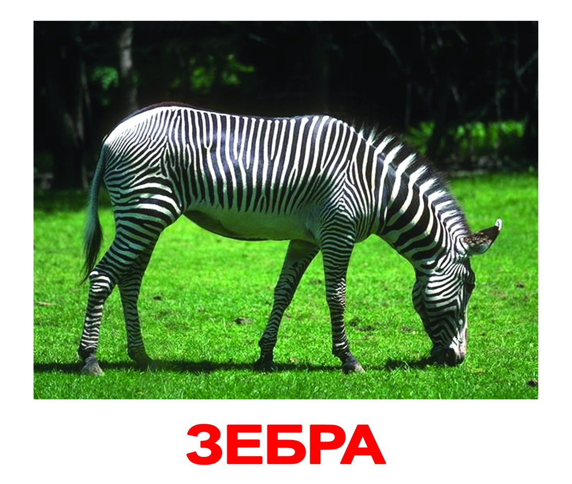 Фото с животными для детей распечатать